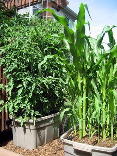 Large Container Gardening | Large Container Gardening | Container Gardens made with large ...