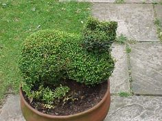 Topiary Tips On Creating An Outdoor Topiary - Outdoor topiary can create a striking effect in your garden. Taking the time to make your own topiary can save you money and give you a gardening focal point that you can be proud of. Learn more here. Topiary Garden, Boxwood Garden, Plants, Outdoor Topiary, Urban Garden, Topiary Plants, Outdoor Gardens, Topiary, Garden Vines