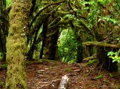The Hobbit Trail, between Florence and Yachats on the Oregon coast.