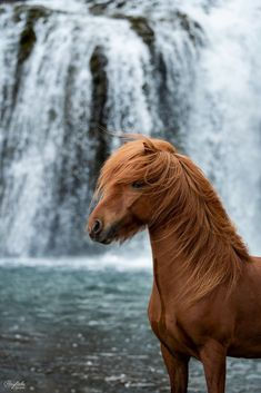 Startseite – Ponyliebe Fotografie – Art Of Equitation Most Beautiful Horses, All The Pretty Horses, Animals Beautiful, Cute Horses, Horse Love, Horse Girl, Horse Photos, Horse Pictures, Animals And Pets