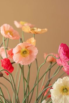 Beautiful poppies.