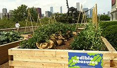About - Peterson Garden Project
