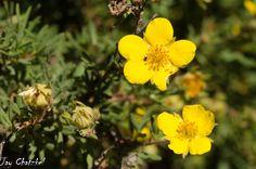 at Arboretum at Flagstaff, AZ