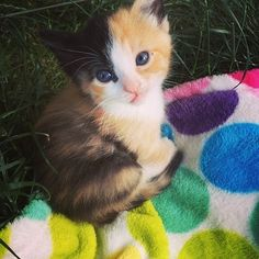 Love Meowfacebook.com Little calico