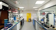Bisset Adams - Birkbeck University Labs.