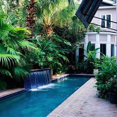 Back Yard - We love having a pool, but with the kids older now the lap pool would be ideal. My favorite feature of the pool is the waterfall. This lush palm tree backdrop is pretty and low-maintainance, definately a plus. The uplighting creates beautifu Pool Spa, Langer Pool, Backyard Pool Landscaping, Backyard Ideas, Pergola Ideas, Garden Ideas, Pergola Kits, Pool Water Features, Small Pools