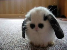 .What ever this is, it's Adorable!!!!!!!!