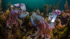 Something strange is happening to the oceans. As coral reefs wither and fisheries collapse, octopuses are multiplying like mad. As soon as they perceive weakness, they will amass an army and invade the land, too.