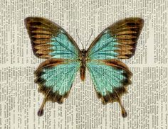 Vintage butterfly aqua blue and brown - printed on page from old dictionary, Jean Cody.