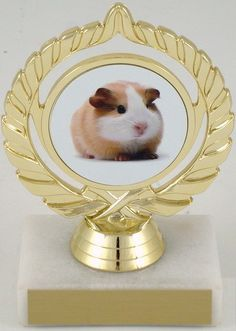 Guinea Pig Trophy