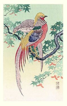 Japanese art print by Koson Ohara Japanese Art, Japanese Maple, Golden Pheasant, Ohara Koson, Bird Stencil, Exotic Art, Illustrations, Art Drawings Sketches, Woodblock Print