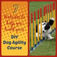 Labradors can do this too! https://thefourleggedkingandi.wordpress.com/2015/01/16/diy-dog-agility-course/