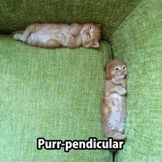 #cat #cute #gato #fofo