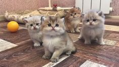We create super funny compilations. You can watch a lot of funny vid. Kittens Cutest Baby, Cute Baby Cats, Cute Cats And Kittens, Cute Baby Animals, Pet Cats, Funny Animals, Funny Kitties, Funny Horses, Ragdoll Kittens