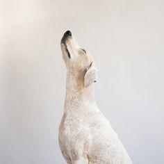 Maddie the Coonhound.