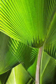 background  / Palm fronds