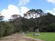 Huia Domain. BBQ and conveniences beside the historic pohutukawa tree. 2015.