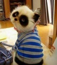 Chat panda.                                                                                                                                                                                 Plus