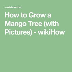 How to Grow a Mango Tree (with Pictures) - wikiHow