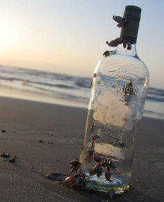 Rum bottle On the beach