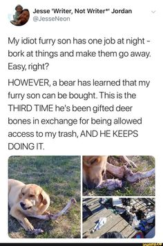 My idiot furry son has one job at night - bork at things and make them go away. Easy, right? HOWEVER, a bear has learned that my furry son can be bought. This is the THIRD TIME he's been gifted deer bones in exchange for being allowed access to Funny Animal Memes, Cute Funny Animals, Funny Dogs, Cute Dogs, Funny Memes, Animal Logic, Stupid Funny, Haha Funny, Funny Cute