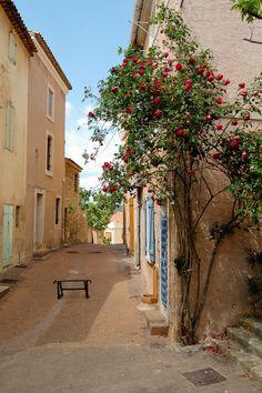 Le rosier (Centre ancien d'Istres)