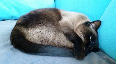 Knoppers Katze | Pawshake