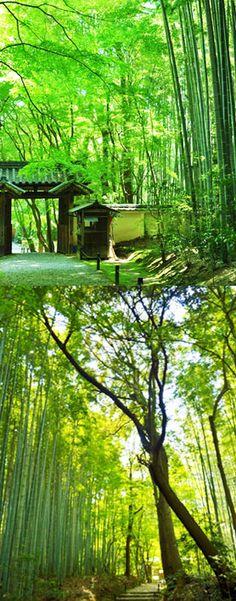 「竹」地蔵院/枯山水/初夏