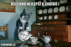 """Even my kitty enjoys tea time.they have learned when the tea kettle heats up I get out the milk for my tea. So now they insist upon having their """"milk time"""" when I have my tea time! Cute Cats, Funny Cats, Funny Animals, Cute Animals, Silly Cats, Wild Animals, Crazy Cat Lady, Crazy Cats, Top Image"""