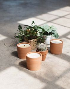 Terra: a new candle line inspired by our love of plants. 5 all-natural scents housed in reusable terra-cotta pots. Beeswax Candles, Diy Candles, Candle Shop, Candle Jars, Happy Birthday Gifts, Branding, Candlemaking, Candle Companies, Candels