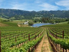 Napa Valley, CA. Live on a Winery