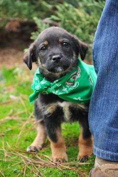 Cider the dog. Available for adoption in Athens, GA.