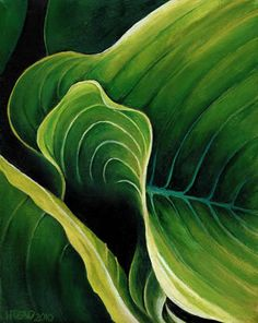 Artworks Currently Available from Helen Read: Undulation 3 - hosta leaf