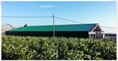 Cubierta en chapa grecada 30/210 color verde navarra, nuevas dependencias de un invernadero.