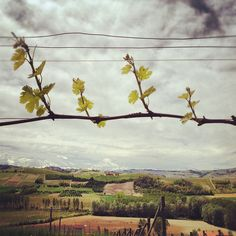 #wine #vineyards #langhe