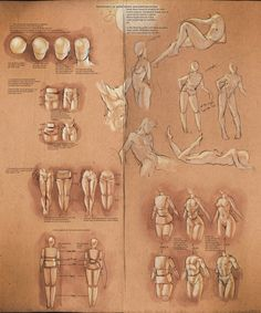 *Simplify Human Anatomy guide*  [by sakimichan on deviantArt]  This is a tip Sheet with some useful info I learned about how to simplify anatomy in school, I'm simply sharing what I know. : )  In school my teacher told us a very important concept. Don't do the details until you have a solid structure done ,otherwise everything will fall apart.