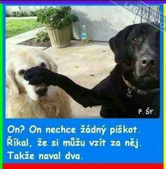 Haha, Comedy, Funny Quotes, Cute Animals, Jokes, Funny Phrases, Pretty Animals, Husky Jokes, Ha Ha
