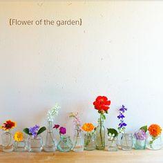 naho81078さんの、アジサイ,植物が好き,暮らしを楽しむ,花のある暮らし,庭の花,珪藻土の壁,一輪挿し,Bathroom,のお部屋写真