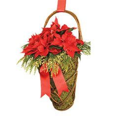 #Poinsettia_Moss-Basket - Swap a #poinsettia's standard plastic pot for a basket lined with moss. You can hang it inside or out for a unique Christmas display. We love poinsettias for their range of colors and sizes. They'll offer nonstop color well into the New Year if you place them in a cool, well-lit room and keep the soil moist but not wet. Big no-no: Don't let plants sit in a water-filled sleeve―they'll rot.