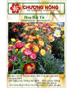 Hạt Giống Chương: Hoa Bất Tử