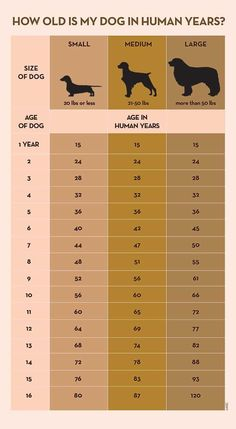 Your Dog's Age In Human Years: A Conversion Chart Your Dog's Age In Human Years: A Conversion Chart Dog years calculator infographic I Love Dogs, Cute Dogs, Dog Health Tips, Pet Health, Dog Ages, Dog Information, Info Dog, Dog Language, Dog Care Tips