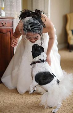 The Flower Dog - Unbelievably Adorable! Cat Wedding, Wedding Dogs, Flower Dog, Dog Dresses, Animals Images, Here Comes The Bride, Celebrity Weddings, Newlyweds, Dog Mom