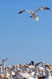 Birds < Revenir à l'index < Back to Index Birds, Animals, Photography, Animales, Animaux, Bird, Animal, Animais