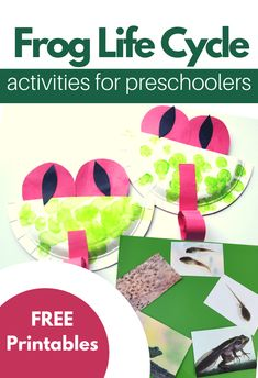 Teach your child about frog life cycles at home with these printables and hands on crafts. These frog life cycle activities are prefect for homeschooling. Frog Activities, Sequencing Activities, Kindergarten Activities, Classroom Activities, Toddler Activities, Preschool Science, Preschool Crafts, Reptiles Preschool, Preschool Ideas