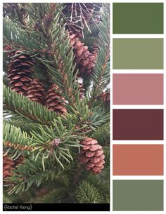 Pinecone Color Scheme #colorscheme