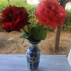 #roses 🌹  Gül hasadinin son gunlerindeyiz! Simdi hediye etmenin tam mevsimi 🌹💐 #simplepleasures #creativeblumen #instagramers #instagood #instadaily #instagram #instaflower #instarose #roses #floraltouch #floral #lifeincolor #pink #red #flowers #flowerlove #flowergirl #instaflower #simpleideas #simplicityeverywhere #flowerlovers