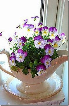 Violas are petite pansies. Love that violas withstand hot weather better than pansies. Deco Floral, Arte Floral, Spring Sign, Pansies, Violas Flowers, Purple Flowers, Easter Flowers, Exotic Flowers, Yellow Roses
