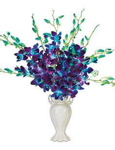 True Blue Orchids - starting at $59.95