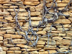Wall With Vine, Gordes, France  2012 / by Marny Perry
