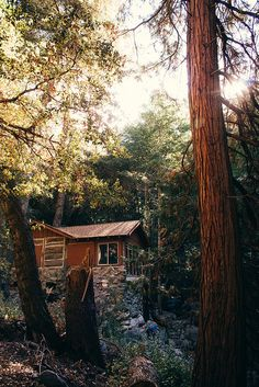 Lonely House Amidst Trees